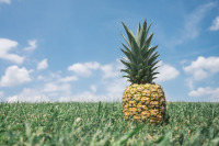Why a tongue burns after eating a pineapple